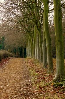 Woodland Pathway - Free Stock Photo