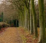Free Photo - Woodland Pathway