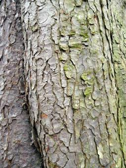 Wood Trunk Texture - Free Stock Photo