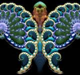 Free Photo - Fractal Butterfly