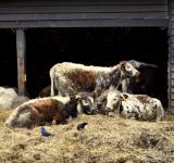Free Photo - Cattle