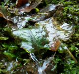 Free Photo - Water and Leaves