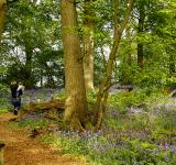 Free Photo - Bluebell walk