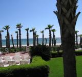 Free Photo - Palm Trees and Oceanfront