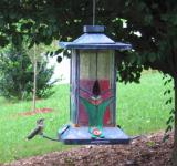 Free Photo - Hummingbird on a Feeder