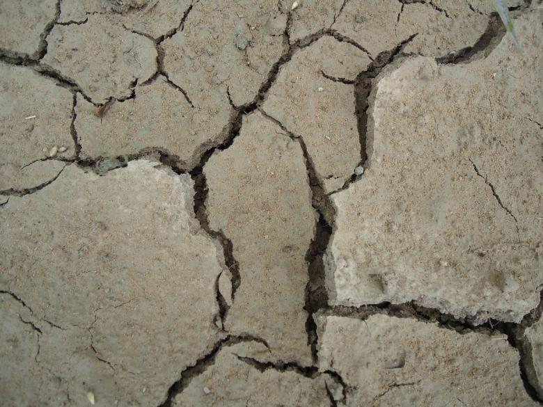 Free Stock Photo of Cracked Mud Texture Created by João Gomes da Silva Brás