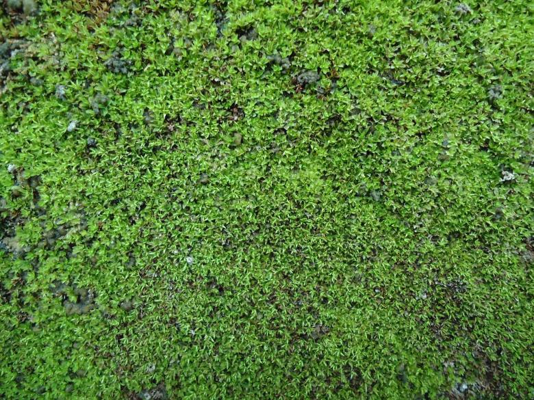 Free Stock Photo of Moss Texture Created by João Gomes da Silva Brás