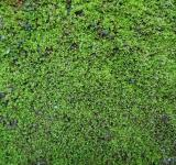 Free Photo - Moss Texture