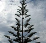 Free Photo - Tree and Sky