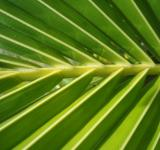 Palm Texture - Free Stock Photo