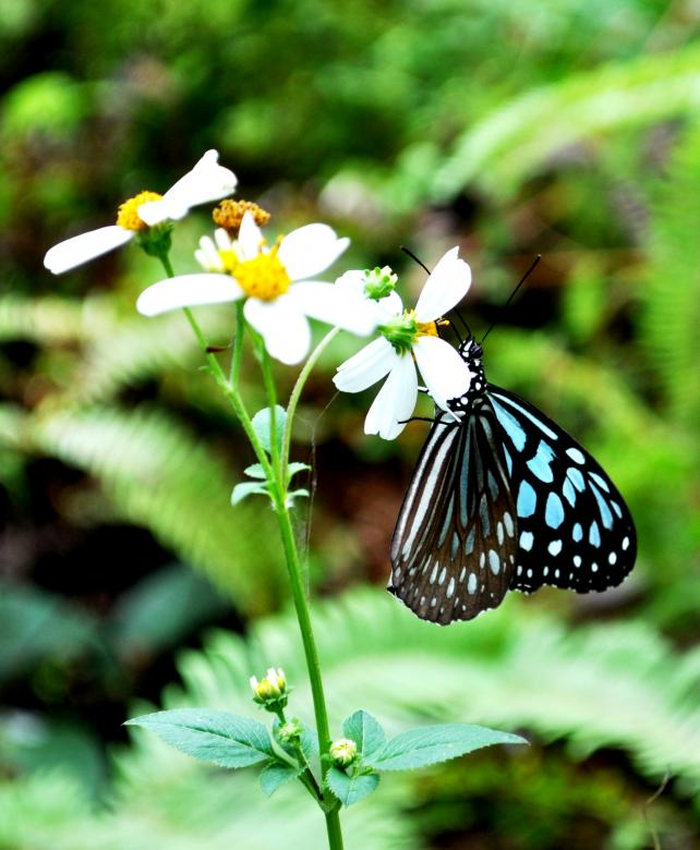 Free Stock Photo of Little Blue Butterfly Created by Maryrose Roque
