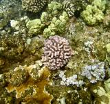 Free Photo - Coral Reef in Hawaii