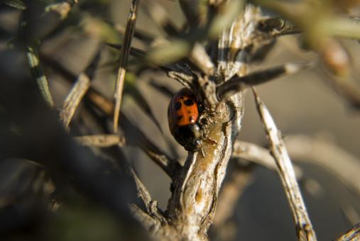 Ladybug in the sunset - Free Stock Photo