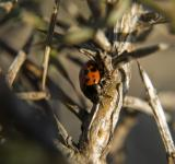 Free Photo - Ladybug in the sunset