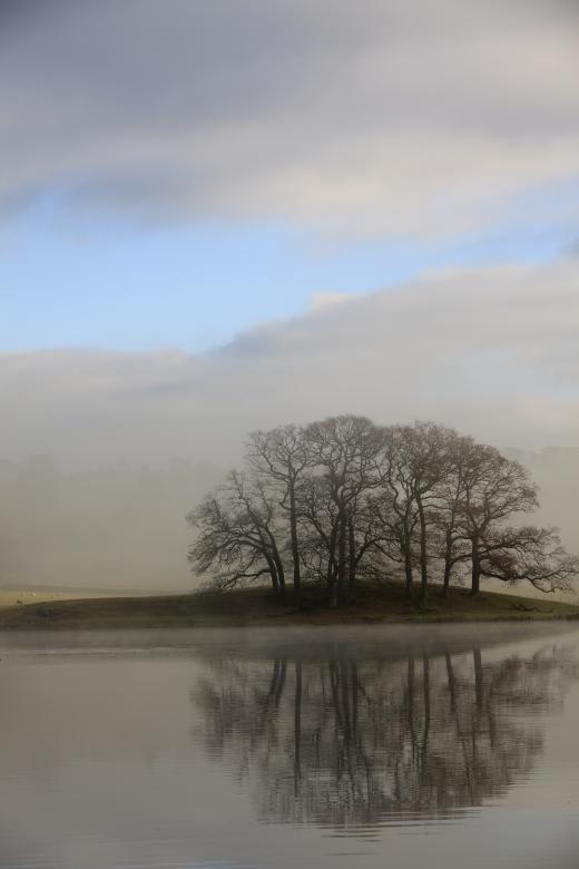 Free Stock Photo of Trees reflected Created by anniegreenwood