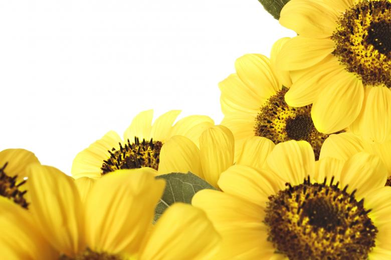 Free Stock Photo of Sunflowers Created by 2happy