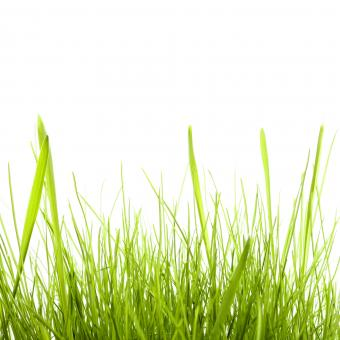 isolated green grass - Free Stock Photo