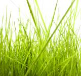 Free Photo - isolated green grass