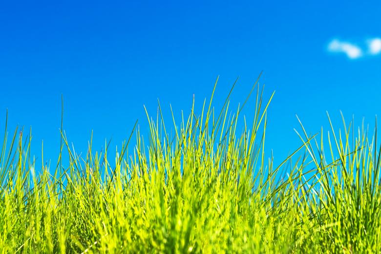 Free Stock Photo of green grass Created by 2happy