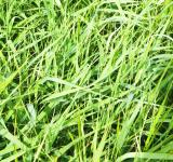 Free Photo - spring green grass