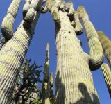 Free Photo - Cactus