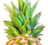 Free Photo - pineapple