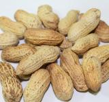 Free Photo - My Peanuts