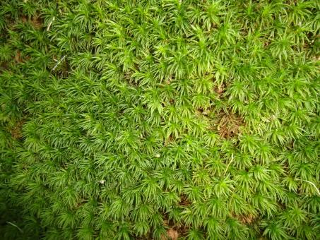 Moss Texture - Free Stock Photo