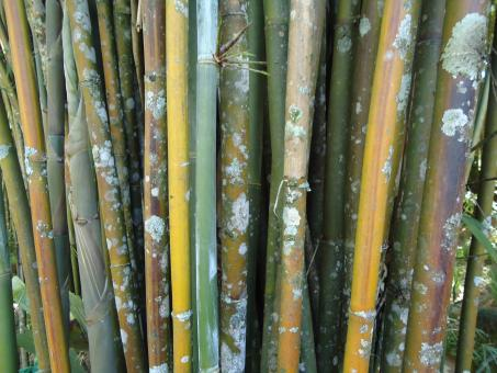 Bamboo with fungus - Free Stock Photo