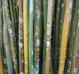 Free Photo - Bamboo with fungus