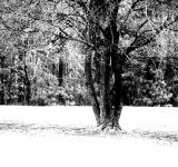 Free Photo - Black and white tree