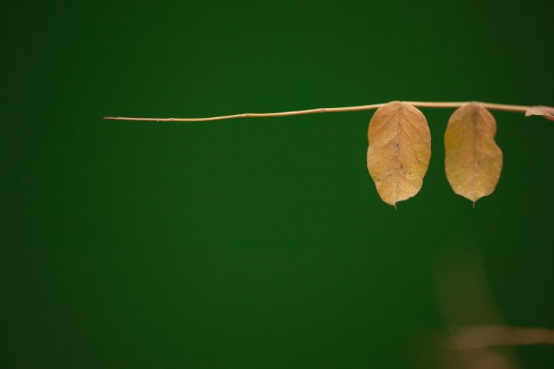 Free Stock Photo of Leaves Created by 2happy