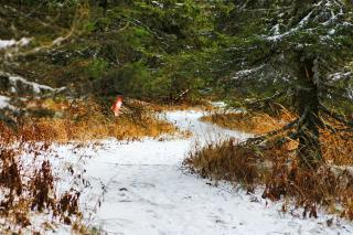 Download Winter path Free Photo
