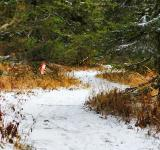 Free Photo - Winter path