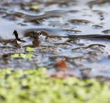 Free Photo - Snake in water
