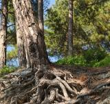 Free Photo - Root system
