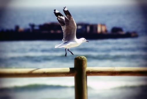 The Seagull - Free Stock Photo