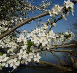 Free Photo - Lakeside Blossoms
