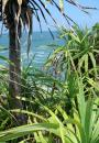 Free Photo - Jungle Beach