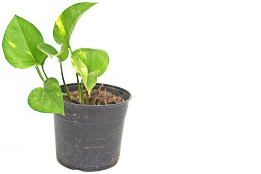 Plant in pot - Free Stock Photo
