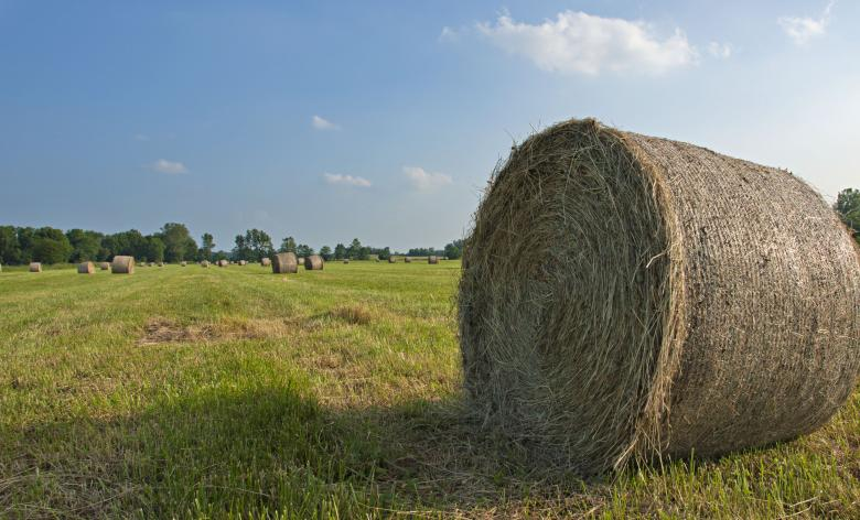 Free Stock Photo of Farm Created by Barry Haynes