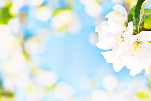 flower background - Free Stock Photo