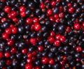 Free Photo - currants