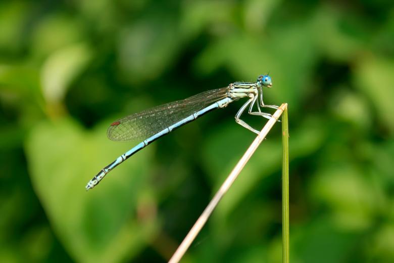 Dragonfly Free Stock Photo