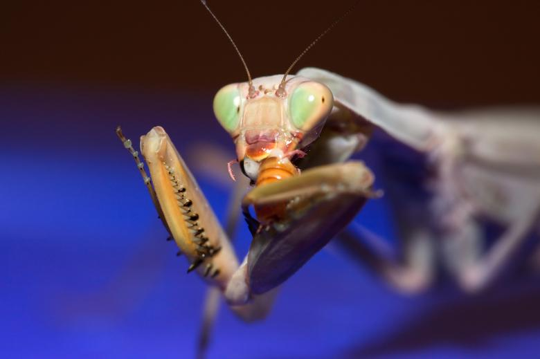 Free Stock Photo of Mantis  Created by 2happy