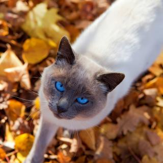 autumn cat  Free Photo