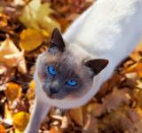 Free Photo - autumn cat