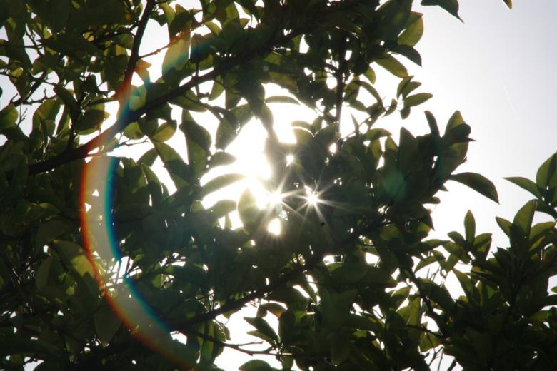 Free Stock Photo of Sun behind a tree Created by Alyssa Fritch