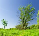 Free Photo - blue and green scene