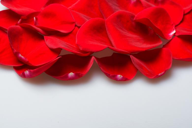 Free Stock Photo of rose petals Created by 2happy